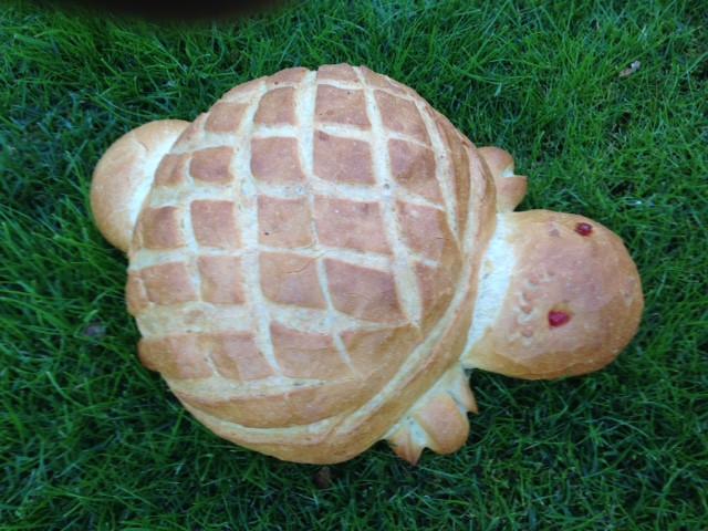 Schildpad - Bakkersonline